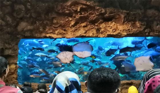 Aquarium Utama Seaworld Ancol