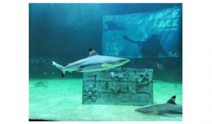 Feeding Show Shark