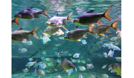 Ikan Seaworld Ancol